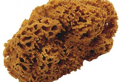 Натуральная морская губка OIKOS